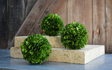 PRESERVED BOXWOOD BALL - 4""