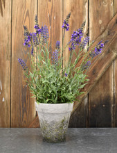 "POTTED LAVENDER  20"" FAUX"