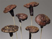 BRAZILIAN MUSHROOMS ON STEM - NATURAL - 12 BUNCHES