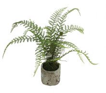 "FERN IN POT 23"" FOREST"