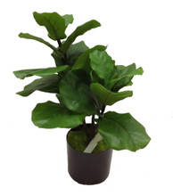 "FIDDLE FIG 26.5"" TABLETOP - FAUX"