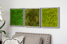 "MOSS WALL ART - 16"" SQ - CHARTREUSE MOSS GREY"