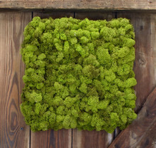"MOSS WALL ART - 12"" SQ CHARTREUSE CANVAS"