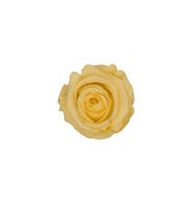 PRESERVED ROSE HEAD - CHAMPAGNE - 5-6 CM DIAM. 6 HEADS