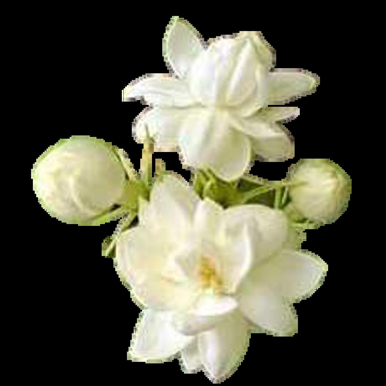 Mogra Alcohol Free Perfume Oil Attar Mist Llc