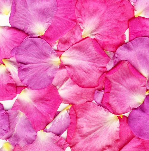 Romance Fragrance Oil - Fresh floral notes