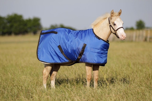 FUTURITY ADJUSTABLE FOAL BLANKET