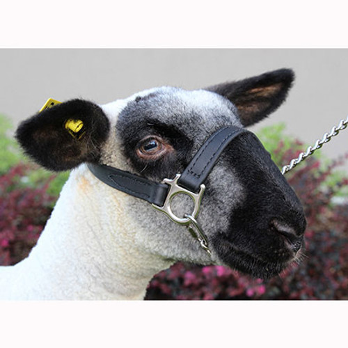 1ST CLASS SHEEP AND GOAT HALTER