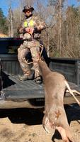 Pulling Deer In Truck