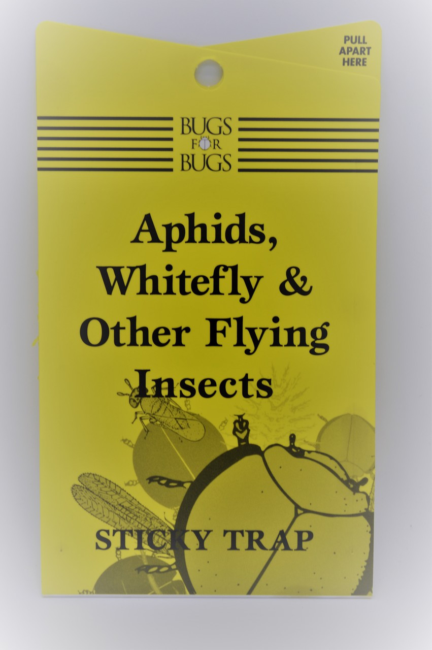 Whitefly Trap Bugs for Bugs