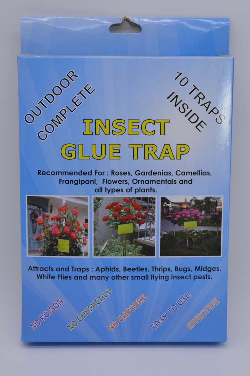 Sticky Traps Std 10 Pack