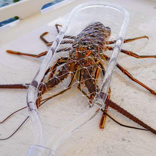 "Lobster Net- ""Clear Threat!"""