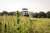 As hemp harvest nears, US farmers face uncertainty