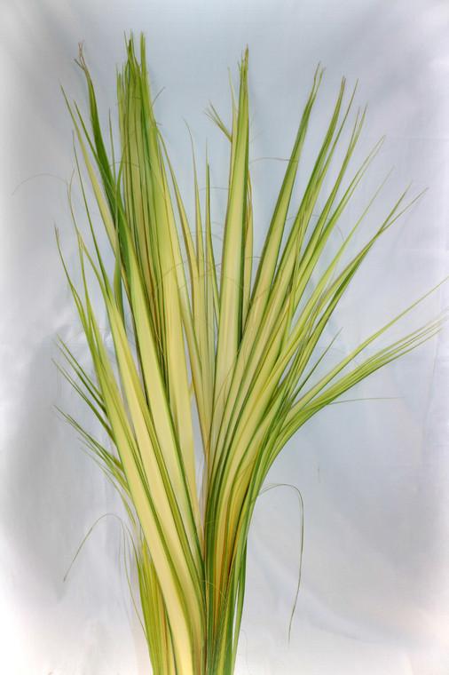 100 Palm Strip Leaves