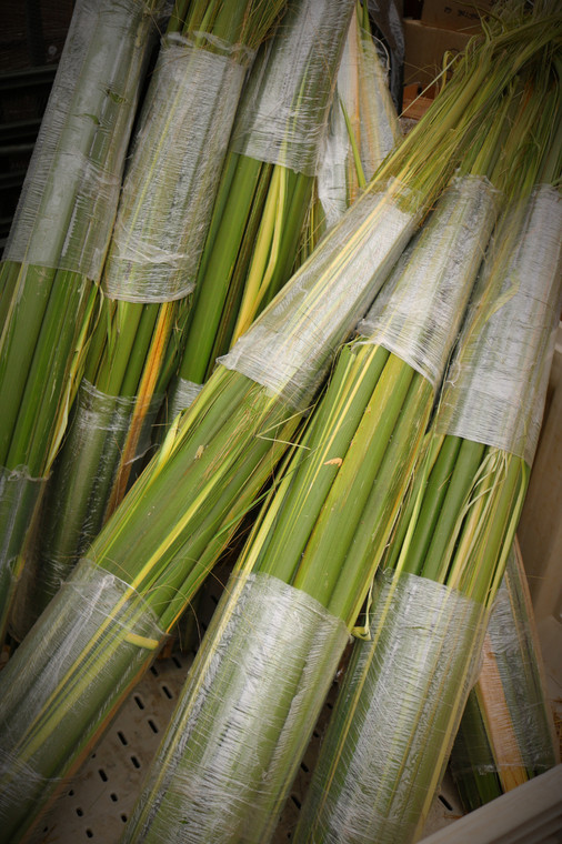 Bales of Palm Pack of 20 Stalks