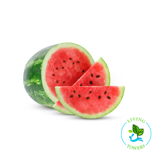 Fruit - Watermelon