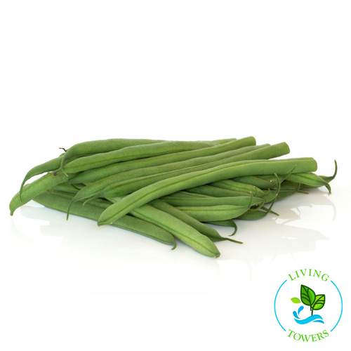 Vegetables - Beans, Green