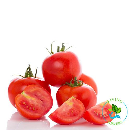 Vegetables - Tomato, Oregon Spring