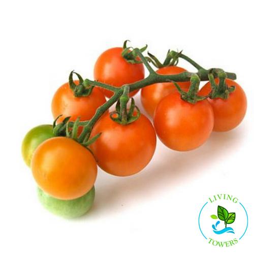 Vegetables - Tomato, Sun Gold