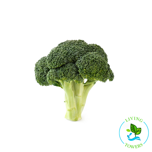 Vegetables - Broccoli, Belstar