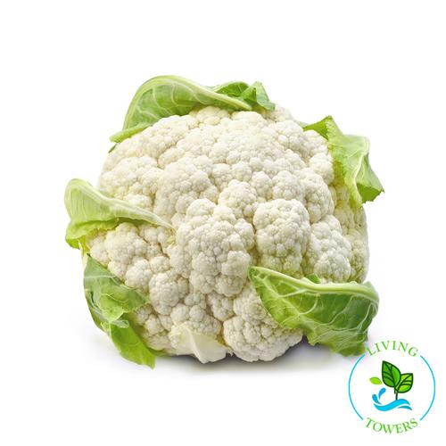 Vegetables - Cauliflower OG