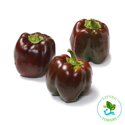Vegetables - Pepper, Bell Sweet Chocolate