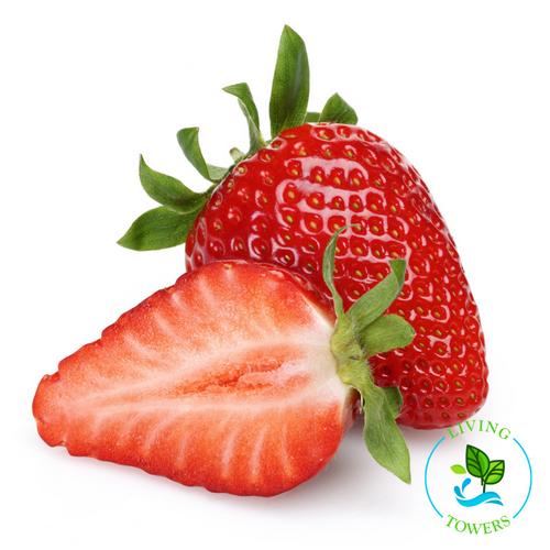 Fruit  - Strawberry, Albion