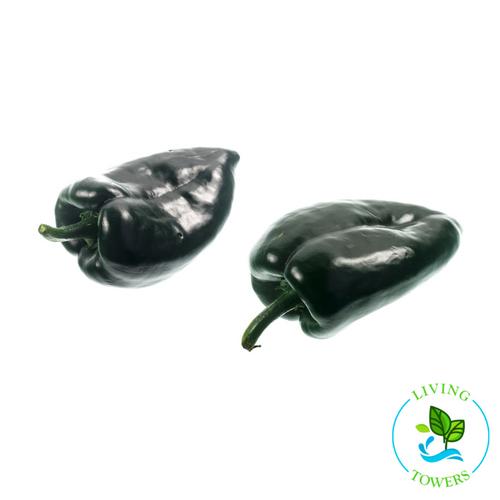 Vegetables - Pepper, Poblano San Ardo