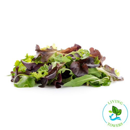 Lettuce - Spring Mix