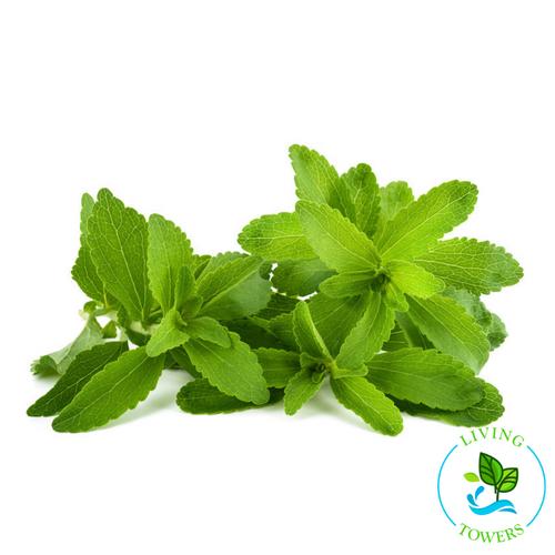 Herbs - Stevia