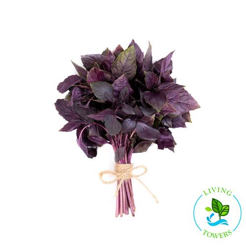 Herbs - Basil, Red Rubin