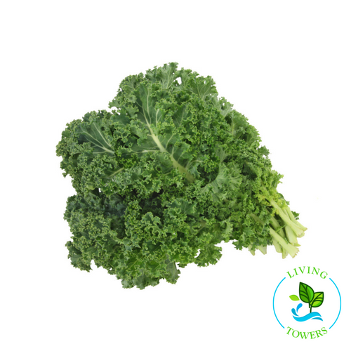 Greens - Kale, Green