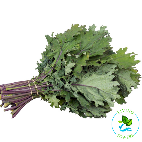 Greens - Kale, Red Russian