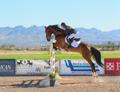 ​5 Tips to Starting Show Jumping