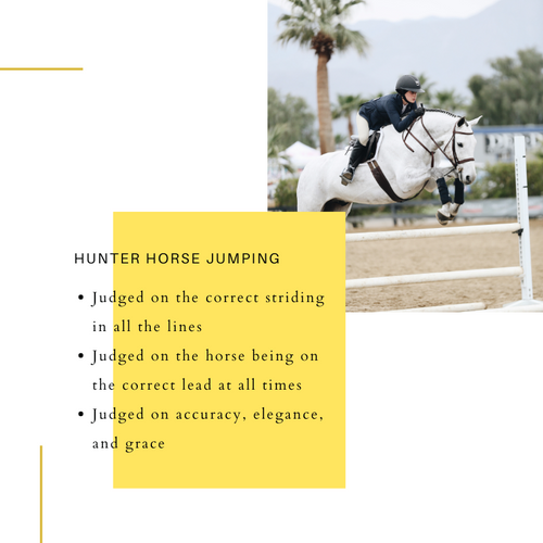 Riding Style and Rules of Hunters Versus Jumpers