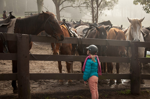 Choosing the Right Horse for a Young Rider