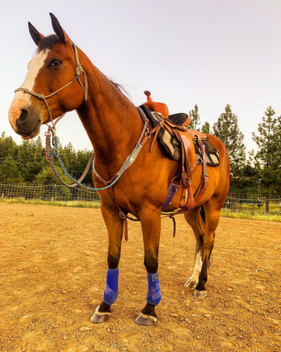 How To Properly Halter Your Horse