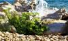 Coastal Cypress & Sea Fennel - Malton Fragrance Oil