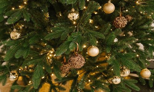 Christmas Tree Fragrance Oil