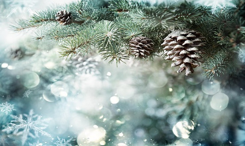 Pine Cone Fragrance Oil