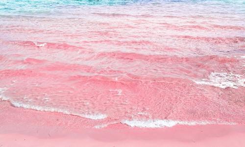 Pink Sands Fragrance Oil