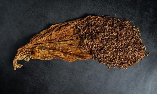 Tobacco Absolute - Malton Fragrance Oil