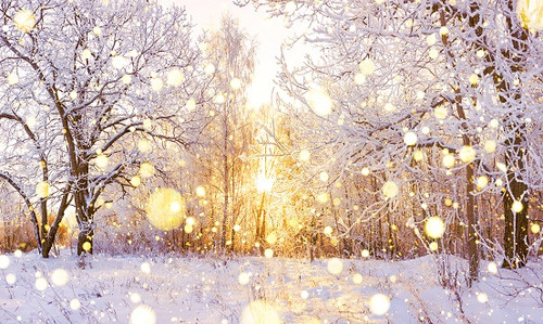 Winter Glow - Yankee Fragrance Oil