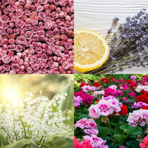 Spring has Sprung 50ml Bundle (6 fragrance oils)