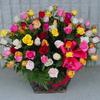 Rose Garden (SA2060)