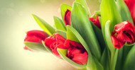 """4 """"Just Because"""" Reasons To Send Flowers"""