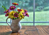 Household Myths for Long-Lasting Cut Flowers (Some Actually Work!)