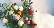 Choose The Perfect Pet-Safe Fresh Flowers