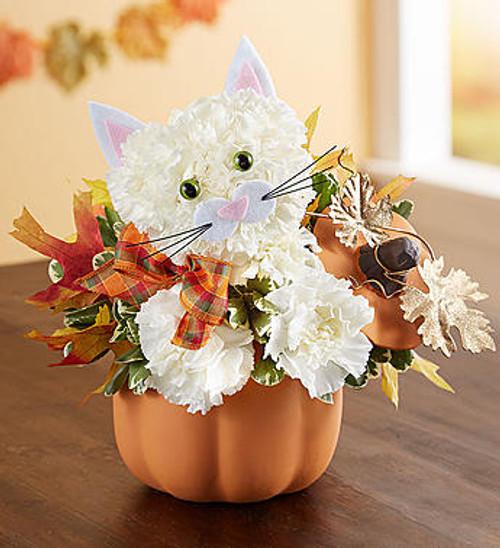 Fabulous Feline™ for Fall