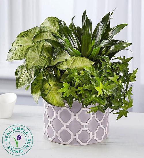Real Simple® Dish Garden